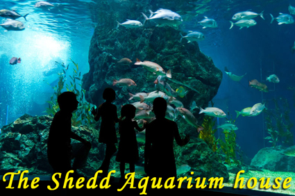 The-Shedd-Aquarium-house