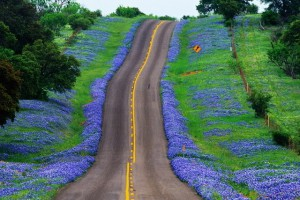 Bluebonnet Trail, Texas